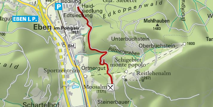 Kitiwapf in Eben im Pongau